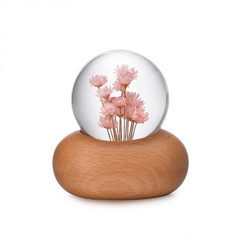粉雏菊音乐盒