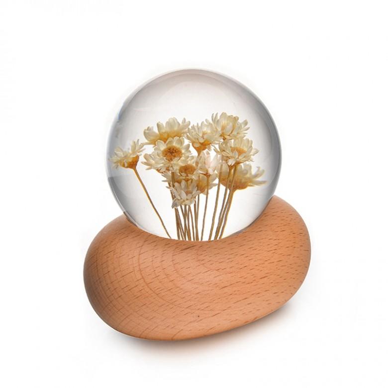 黄雏菊音乐盒